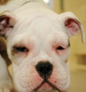 allergische reactie dikke ogen